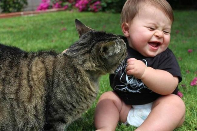 Фото 12 - Коты и дети