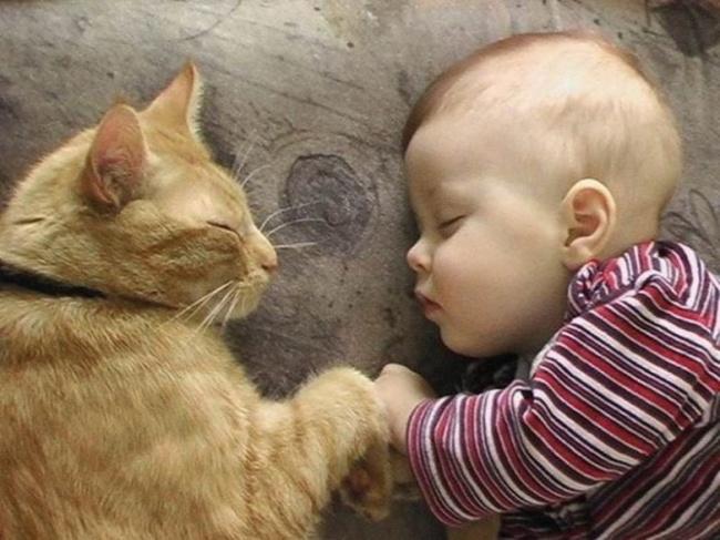 Фото 2 - Коты и дети