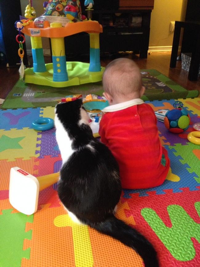 Фото 3 - Коты и дети
