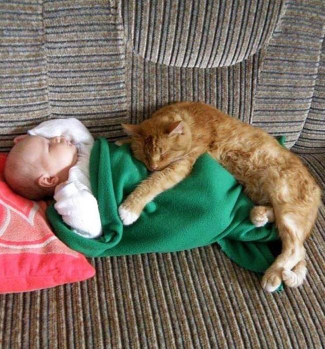 Фото 22 - Коты и дети