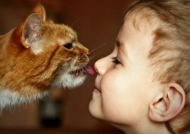 Фото 7 - Коты и дети