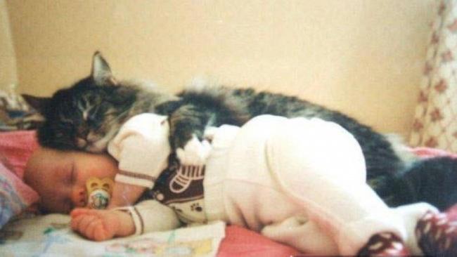 Фото 14 - Коты и дети