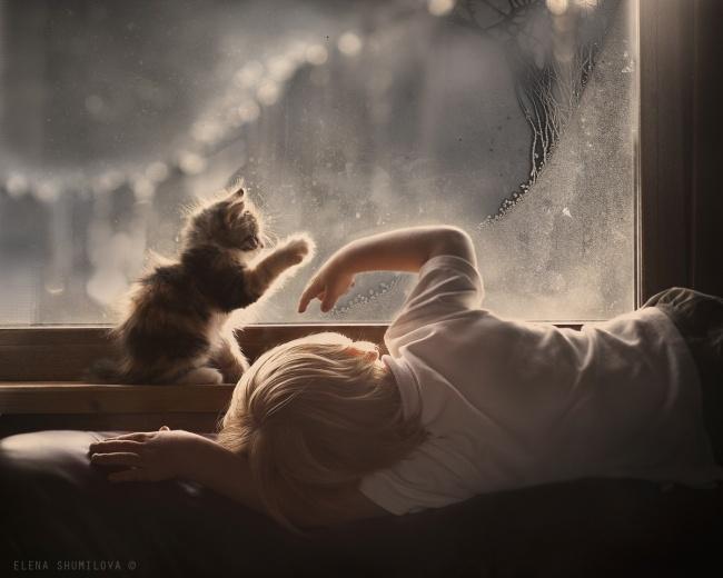 Фото 20 - Коты и дети