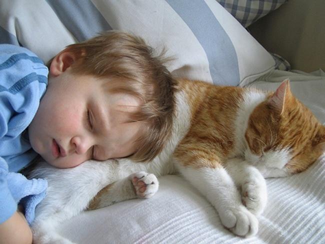 Фото 15 - Коты и дети