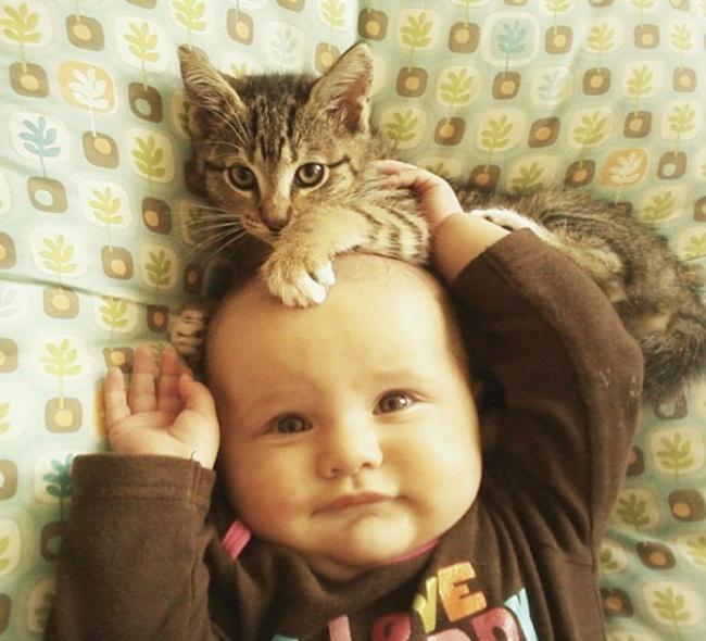 Фото 16 - Коты и дети