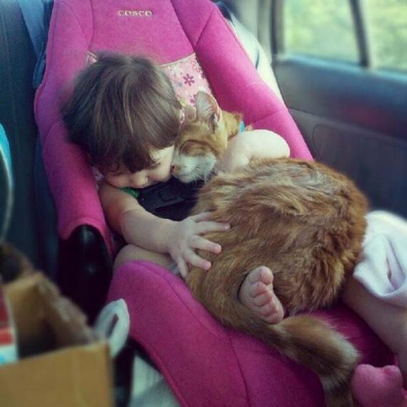 Фото 1 - Коты и дети