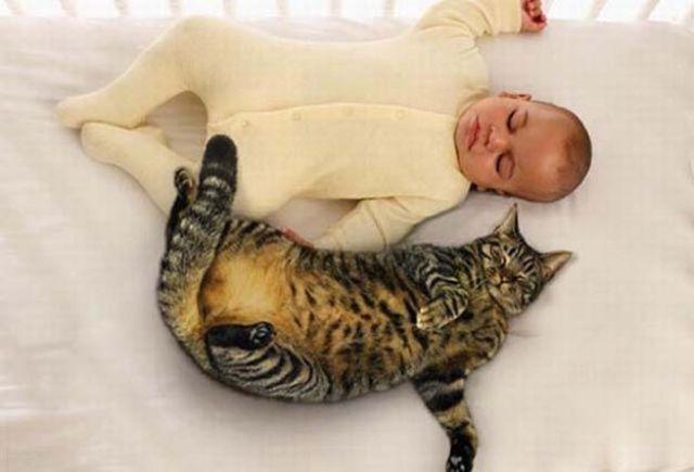 Фото 19 - Коты и дети