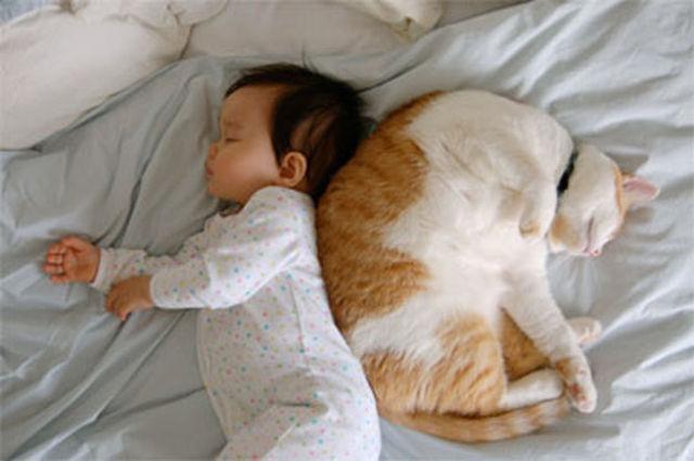 Фото 27 - Коты и дети