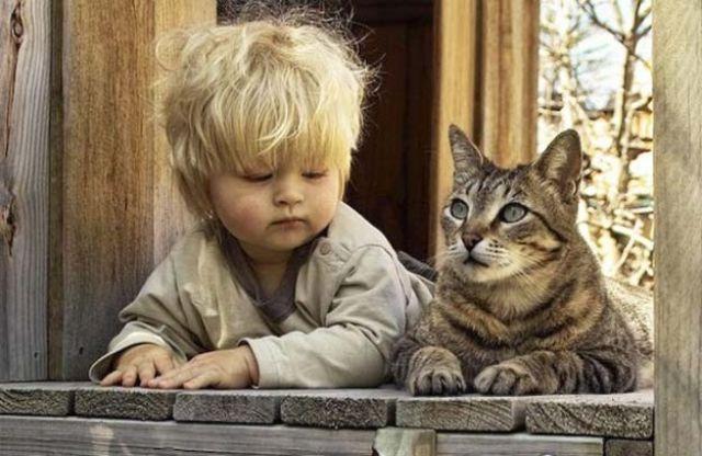 Фото 8 - Коты и дети