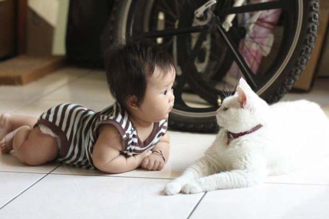Фото 9 - Коты и дети