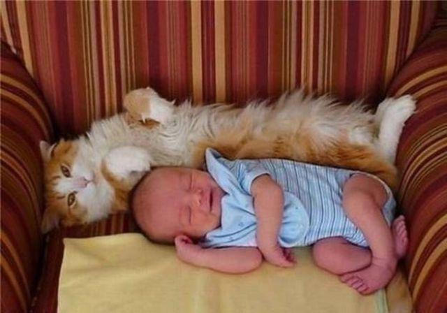 Фото 29 - Коты и дети