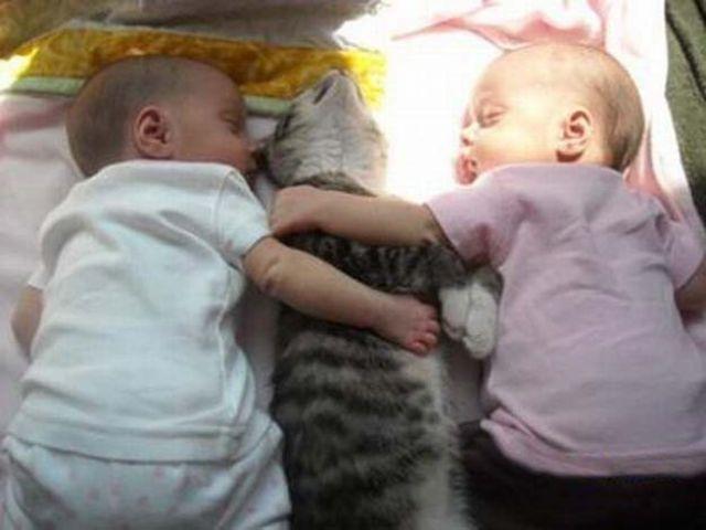 Фото 10 - Коты и дети