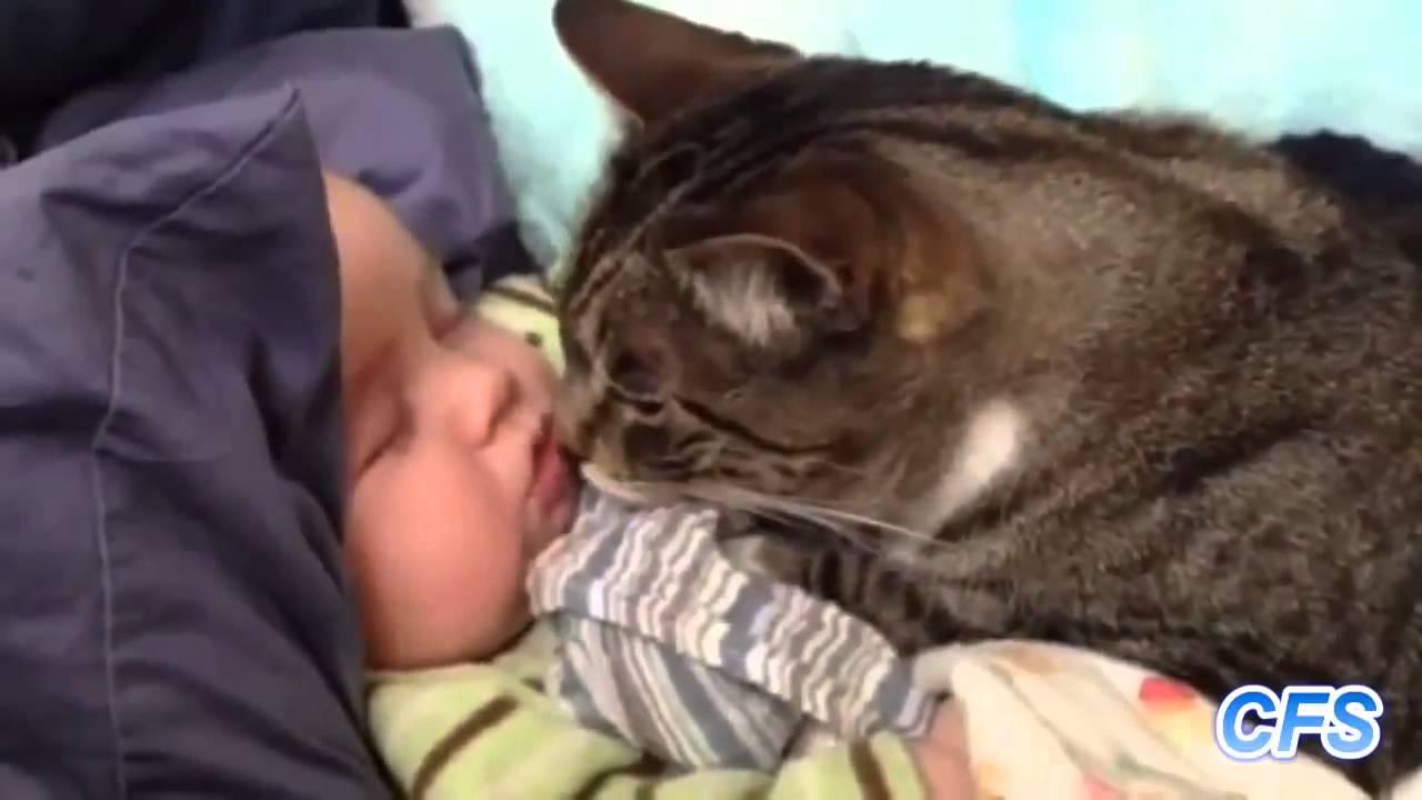 Фото 30 - Коты и дети