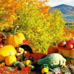 ТОП 15 самых полезных овощей и фруктов для осени