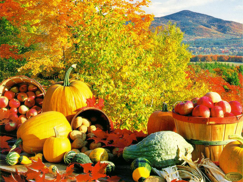 Фото - Правила питания осенью