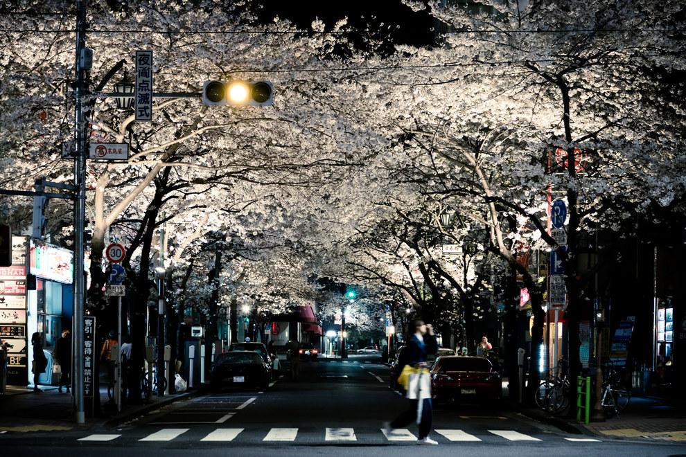Фото - Улица Японии