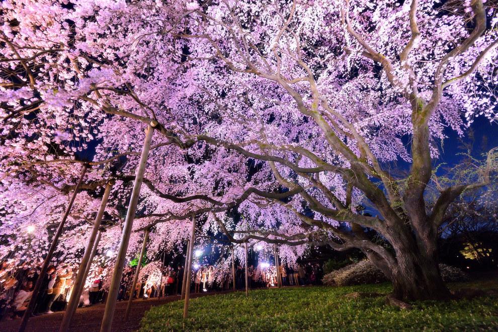 Фото - Цветущее дерево