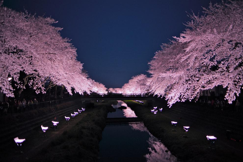 Фото - Цветущий вишни в  Японии