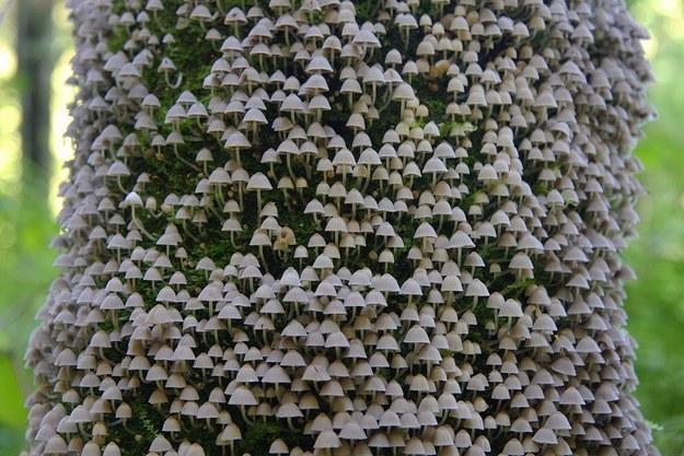 Фото - Грибы на дереве