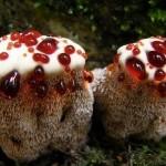 17 фото грибов, которые вас удивят