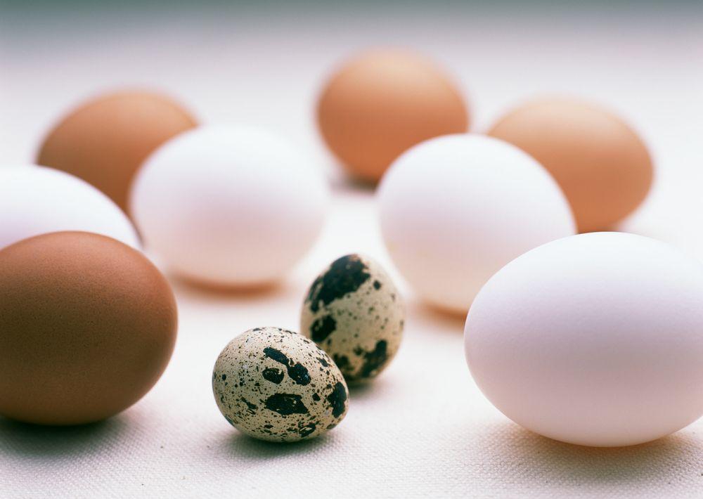 Фото - Яйца птицы что бы улучшить память